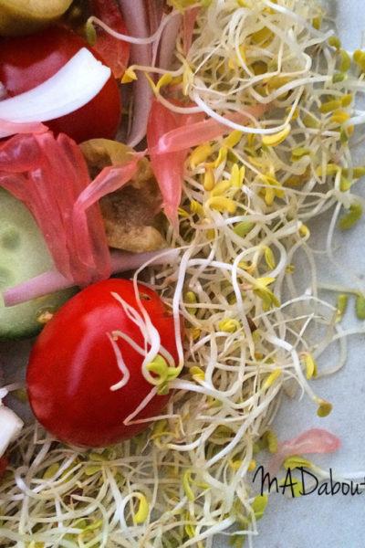 ALFalfa Grapefruit Nest